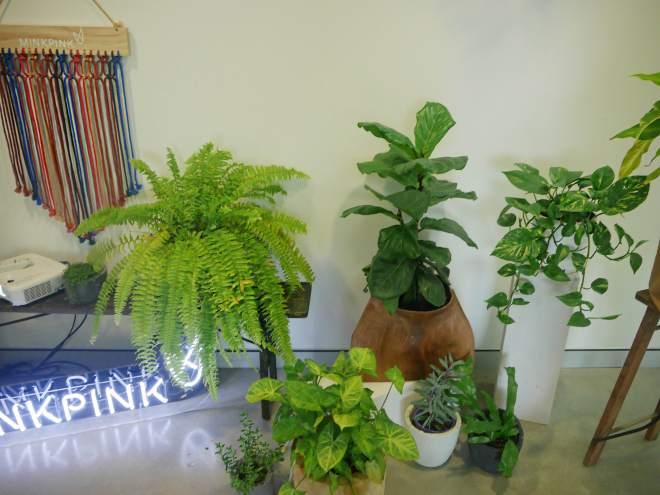 Neon Sign & Plant Love